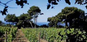 the boom of oenotourism in provence