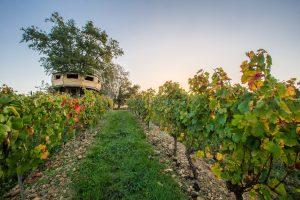 wine tourism on winetourbooking
