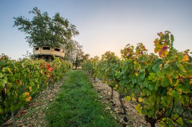 wine tourism on winetourbooking