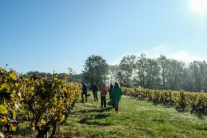 Oenotourisme - WineTourBooking