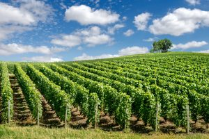 champagne-montagne-de-reims-epernay-vin-wine-tour-booking
