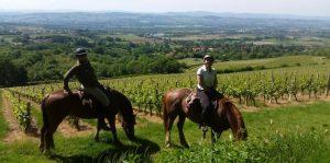 Balade à cheval dans les vignes au Château Chatain
