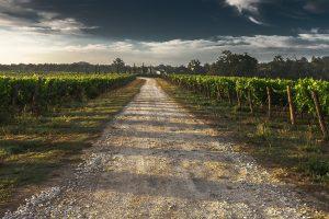 œnotourisme en France WineTourBooking