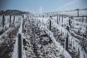 oenotourism - Wine Tour Booking