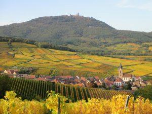 alsace-landscape-vineyard