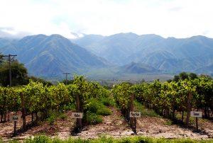 Le vignoble de Cafayate