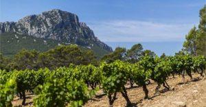 Les vignes et leur vue sur les Pyrénées