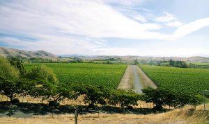 Le vignoble de Marlborough