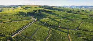 Parcelles de vignes du vignoble de la Loire