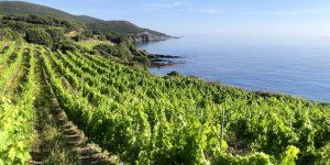 Vue du vignoble et du Cap Corse