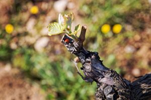 Vin biologiques, biodynamiques ou natures, wine tour booking