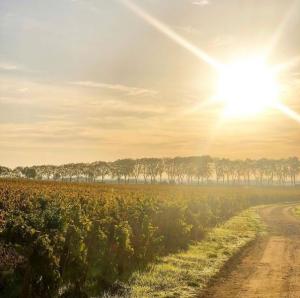 Château de Pommard sun global warming wine tour booking