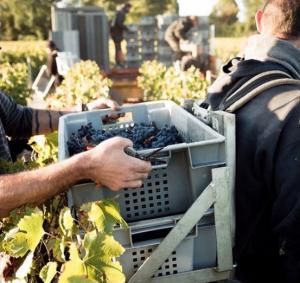 Château malartic lagravière global warming grapàe harvest wine tour booking