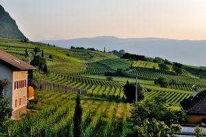 Tour des vignobles Savoie Oenotourisme Wine Tour Booking