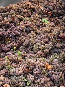 cépage vignoble sud ouest oenotourisme wine tour booking
